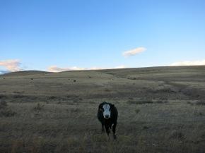 Howdy! Montana hat mein Herzerobert.