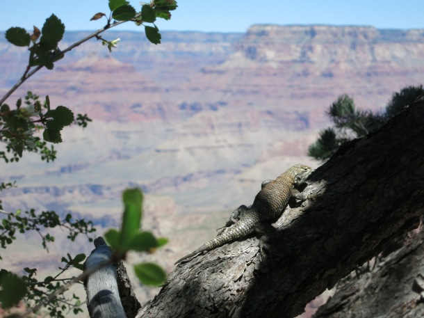 Grand Canyon (93)
