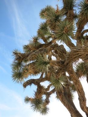 Alienbäume und Wüstenträume.