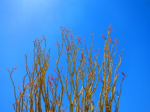 Joshua Tree (7)