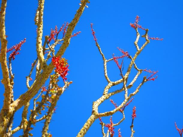 Joshua Tree (9)